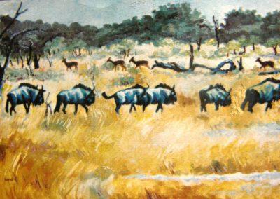 Bloues in veld