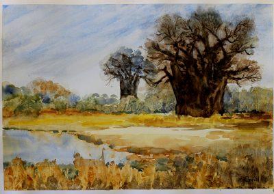 Kaudom Baobabs